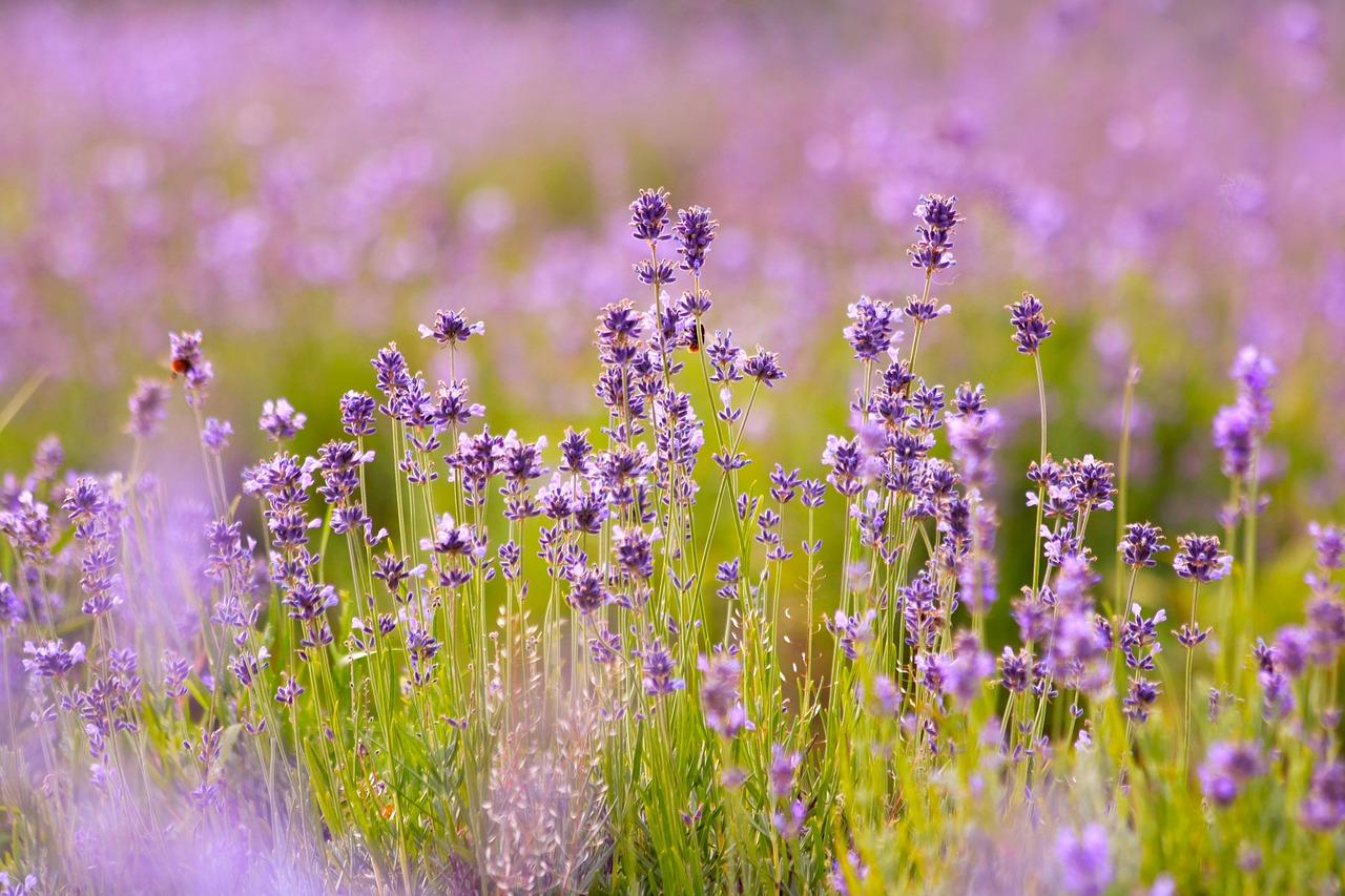 aromaterápa